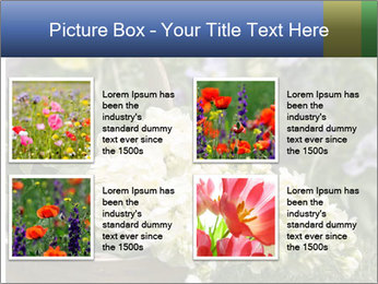 Freshly picked cream Matthiola Incana PowerPoint Template - Slide 14