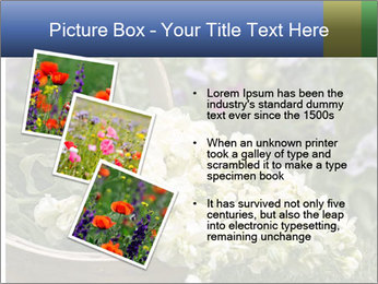 Freshly picked cream Matthiola Incana PowerPoint Template - Slide 17