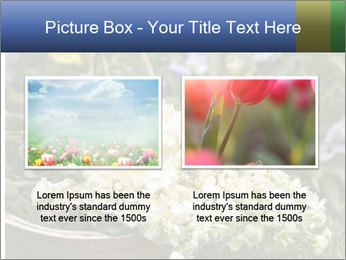 Freshly picked cream Matthiola Incana PowerPoint Template - Slide 18