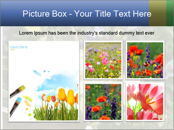 Freshly picked cream Matthiola Incana PowerPoint Template - Slide 19