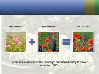 Freshly picked cream Matthiola Incana PowerPoint Template - Slide 22