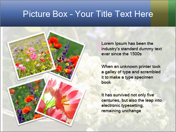 Freshly picked cream Matthiola Incana PowerPoint Template - Slide 23