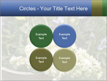 Freshly picked cream Matthiola Incana PowerPoint Template - Slide 38