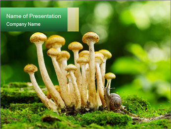 Mushrooms honey agaric in a forest PowerPoint Template - Slide 1