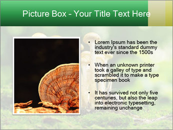 Mushrooms honey agaric in a forest PowerPoint Template - Slide 13
