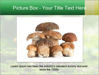 Mushrooms honey agaric in a forest PowerPoint Template - Slide 15