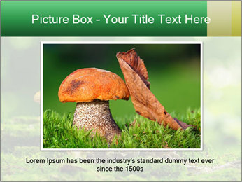 Mushrooms honey agaric in a forest PowerPoint Template - Slide 16