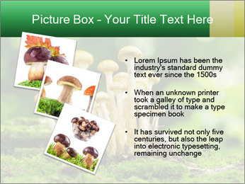 Mushrooms honey agaric in a forest PowerPoint Template - Slide 17