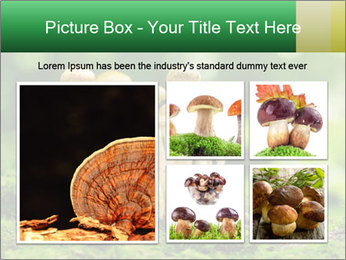 Mushrooms honey agaric in a forest PowerPoint Template - Slide 19
