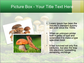 Mushrooms honey agaric in a forest PowerPoint Template - Slide 20