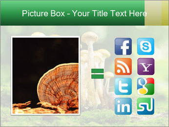 Mushrooms honey agaric in a forest PowerPoint Template - Slide 21