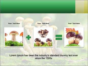 Mushrooms honey agaric in a forest PowerPoint Template - Slide 22