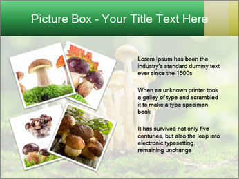 Mushrooms honey agaric in a forest PowerPoint Template - Slide 23