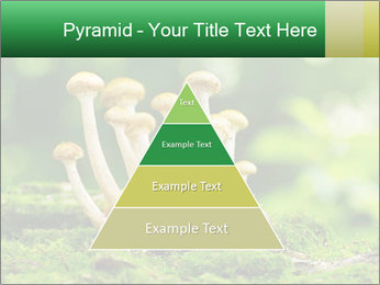 Mushrooms honey agaric in a forest PowerPoint Template - Slide 30