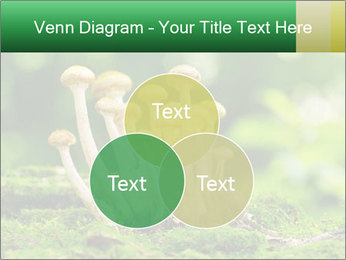 Mushrooms honey agaric in a forest PowerPoint Template - Slide 33