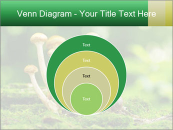 Mushrooms honey agaric in a forest PowerPoint Template - Slide 34