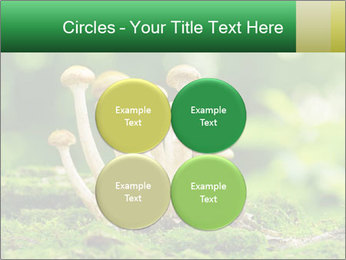 Mushrooms honey agaric in a forest PowerPoint Template - Slide 38