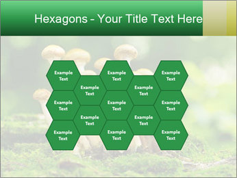 Mushrooms honey agaric in a forest PowerPoint Template - Slide 44