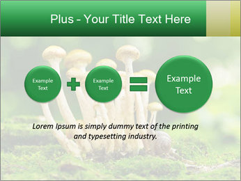Mushrooms honey agaric in a forest PowerPoint Template - Slide 75