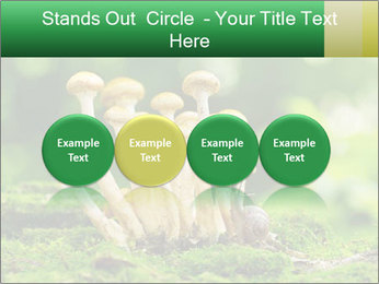 Mushrooms honey agaric in a forest PowerPoint Template - Slide 76