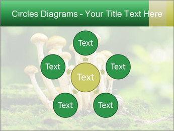 Mushrooms honey agaric in a forest PowerPoint Template - Slide 78