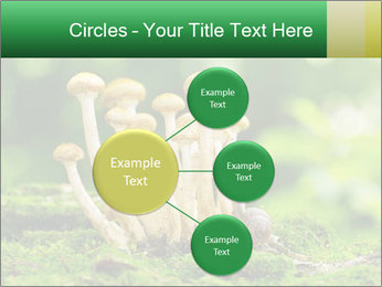 Mushrooms honey agaric in a forest PowerPoint Template - Slide 79