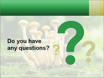 Mushrooms honey agaric in a forest PowerPoint Template - Slide 96