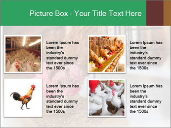 Eating and eggs PowerPoint Template - Slide 14