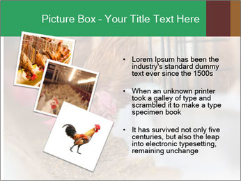 Eating and eggs PowerPoint Template - Slide 17
