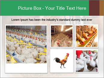 Eating and eggs PowerPoint Template - Slide 19