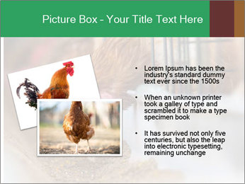 Eating and eggs PowerPoint Template - Slide 20