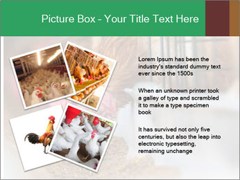 Eating and eggs PowerPoint Template - Slide 23