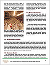 0000088215 Word Templates - Page 4