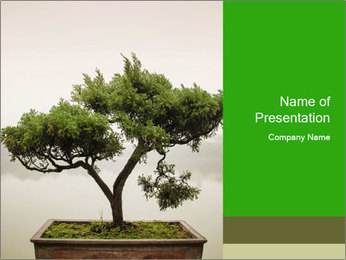 Chinese green bonsai tree PowerPoint Template