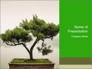 Chinese green bonsai tree PowerPoint Templates