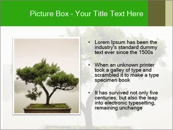Chinese green bonsai tree PowerPoint Template - Slide 13