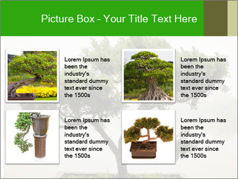 Chinese green bonsai tree PowerPoint Template - Slide 14