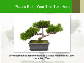 Chinese green bonsai tree PowerPoint Template - Slide 15