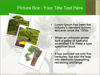 Chinese green bonsai tree PowerPoint Template - Slide 17