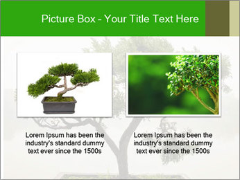 Chinese green bonsai tree PowerPoint Template - Slide 18
