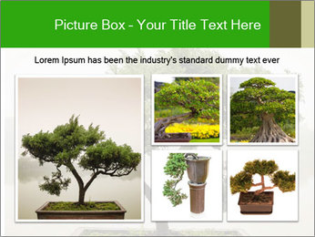 Chinese green bonsai tree PowerPoint Template - Slide 19