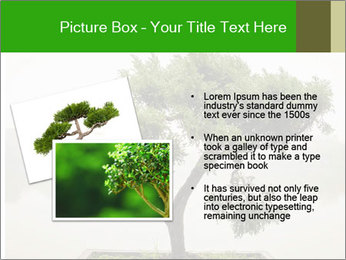 Chinese green bonsai tree PowerPoint Template - Slide 20