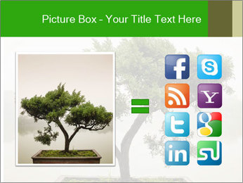 Chinese green bonsai tree PowerPoint Template - Slide 21