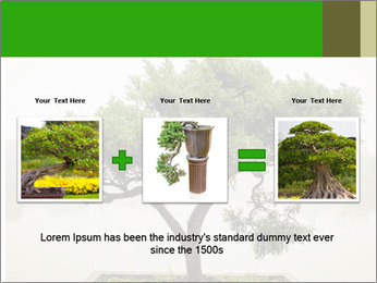 Chinese green bonsai tree PowerPoint Template - Slide 22