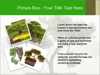 Chinese green bonsai tree PowerPoint Template - Slide 23