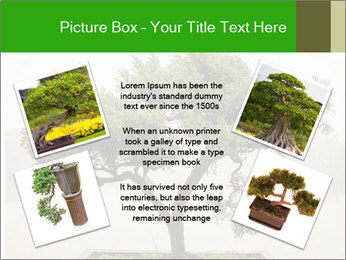 Chinese green bonsai tree PowerPoint Template - Slide 24