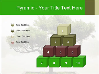 Chinese green bonsai tree PowerPoint Template - Slide 31