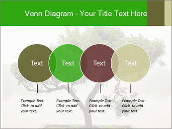 Chinese green bonsai tree PowerPoint Template - Slide 32