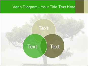 Chinese green bonsai tree PowerPoint Template - Slide 33