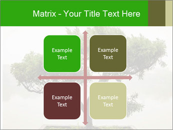 Chinese green bonsai tree PowerPoint Template - Slide 37